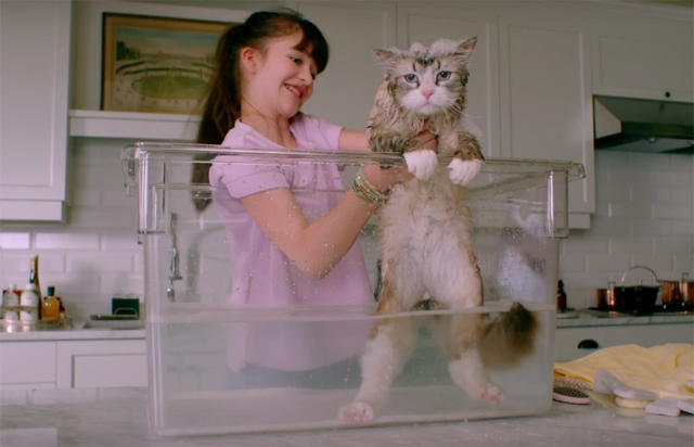New Nine Lives Trailer: Kevin Spacey is Annoyed That He's a Cat