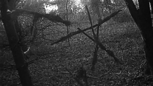 blair witch legend a guide to the entire franchise. Black Bedroom Furniture Sets. Home Design Ideas