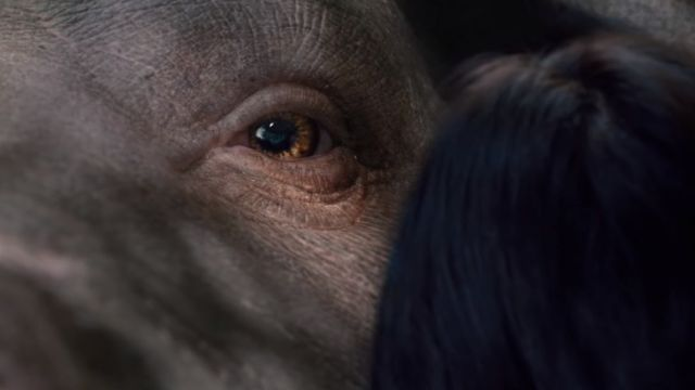 New Okja Trailer Introduces You to Your New Best Friend