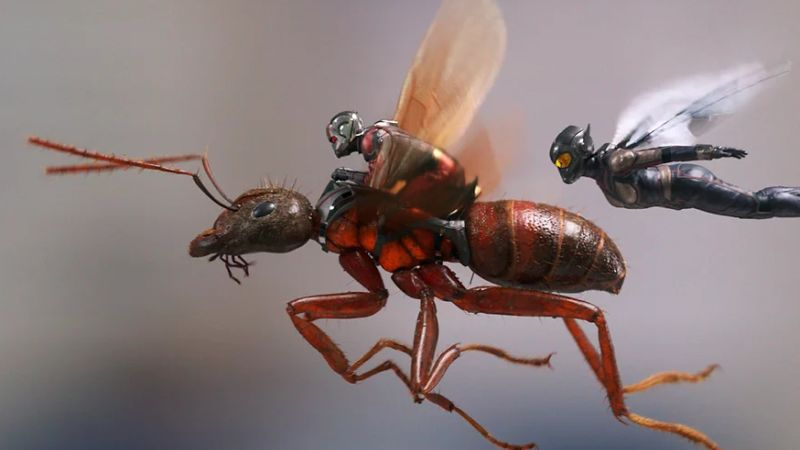 new antman and the wasp photos details on sequel
