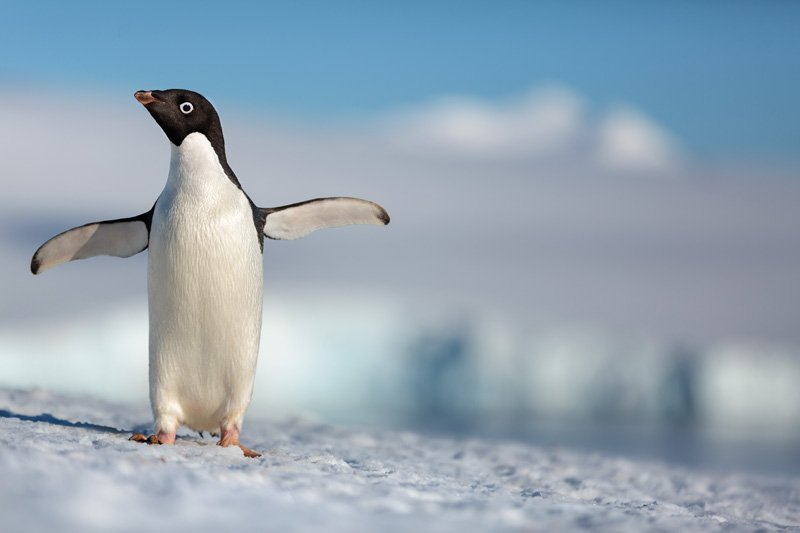 Disneynature Schedules Penguins for Earth Day 2019