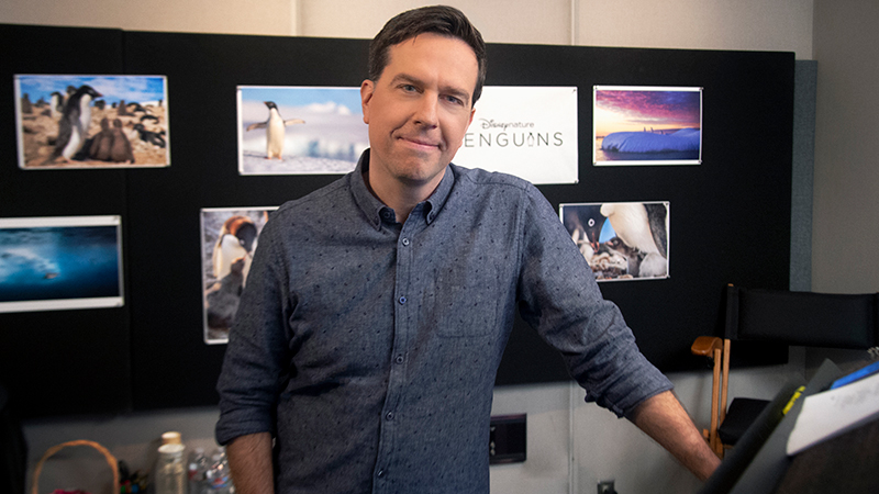 Penguins: Ed Helms to Narrate Disneynature's Feature Film