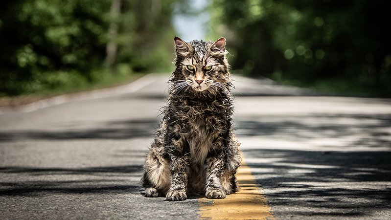 Unearthing the Stephen King References in Pet Sematary