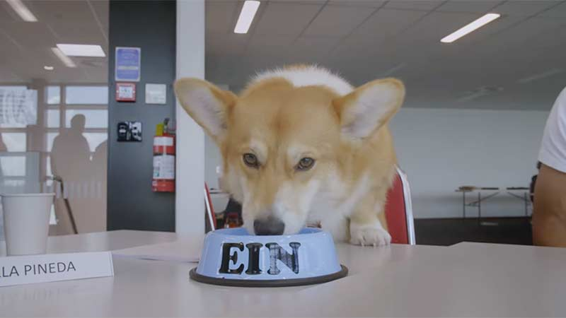 Ein the Dog Announces Cowboy Bebop Live-Action Series Has Begun Production