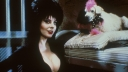 elvira-m-of-the-dark-0038